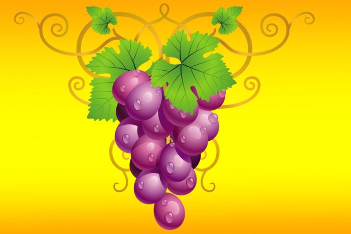 ж vinograd
