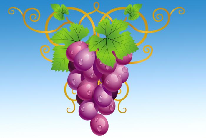 blue vinograd